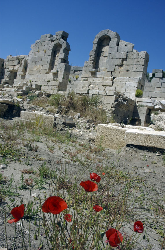 Patara Amphitheater Flowers